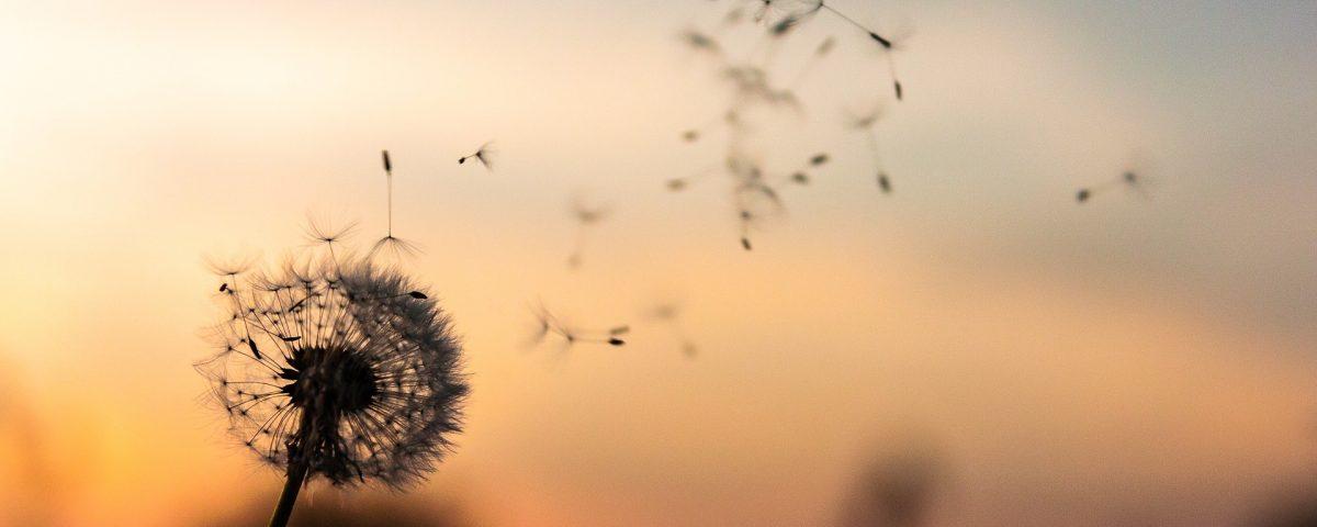 Allergie stagionali: cause e rimedi
